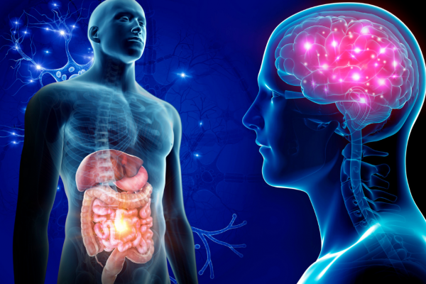 IVANA ČORDAŠ: Veza između mozga i probavnog sustava